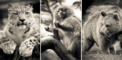 Animal portraits @ Zoo de Servion, Switzerland, 01.09.2011 by st