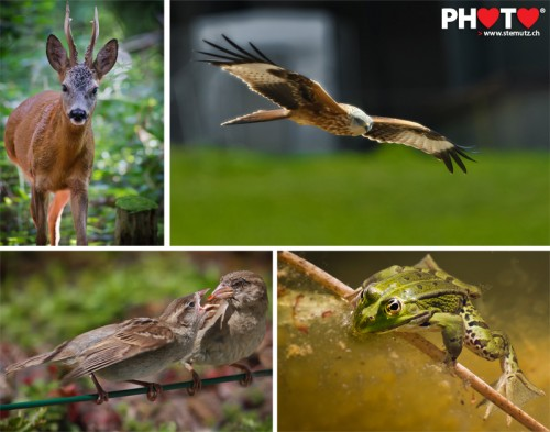 Photofri Wild Animal Photo Contest: 2è place / 2. Platz / 2nd place !! ...