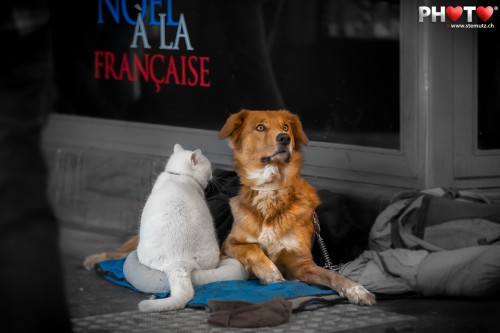 Noël à la Française (X-Mas french style) ... cat & dog in the street of Bern
