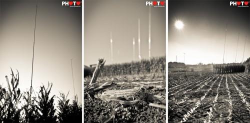 Strange alien giraffes in the corn field ...